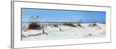Tall Grass on the Beach, Perdido Key Area, Gulf Islands National Seashore, Pensacola, Florida, USA--Framed Photographic Print