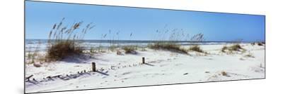 Tall Grass on the Beach, Perdido Key Area, Gulf Islands National Seashore, Pensacola, Florida, USA--Mounted Photographic Print