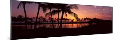 Silhouette of Palm Trees at Sunset, Anaehoomalu Bay, Waikoloa, Hawaii, USA--Mounted Photographic Print