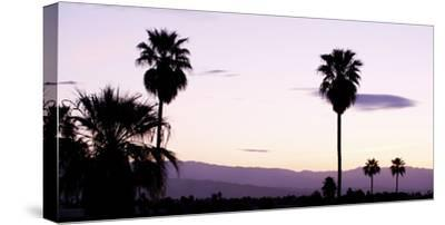 Silhouette of Palm Trees at Dusk, Palm Springs, Riverside County, California, USA--Stretched Canvas Print