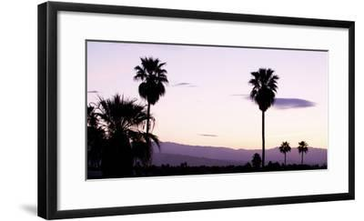 Silhouette of Palm Trees at Dusk, Palm Springs, Riverside County, California, USA--Framed Photographic Print