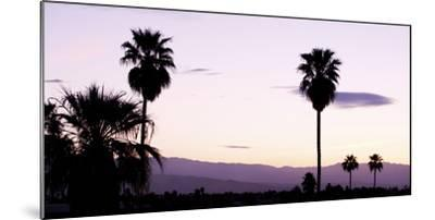 Silhouette of Palm Trees at Dusk, Palm Springs, Riverside County, California, USA--Mounted Photographic Print