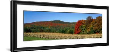 Ripe Corn Autumn Leaves Vermont USA--Framed Photographic Print
