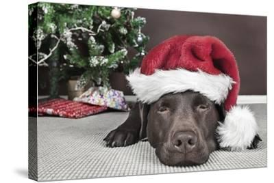 Labrador in Santa Hat Sleeping by Xmas Tree--Stretched Canvas Print