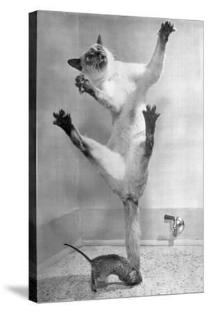 Cat Jumping over Mouse--Stretched Canvas Print