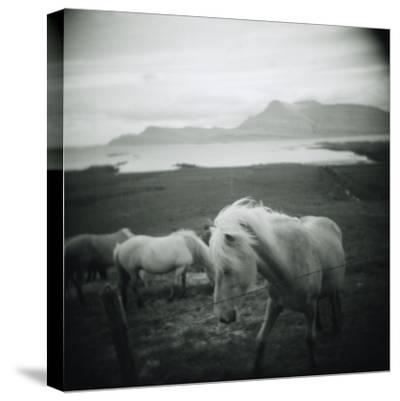 Horses in Pasture--Stretched Canvas Print