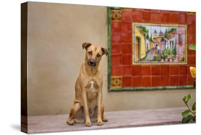 Pet Dog, Baja, Mexico--Stretched Canvas Print