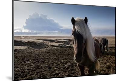 Icelandic Horses Near Ash Plume from Eyjafjallajokull Eruption--Mounted Premium Photographic Print