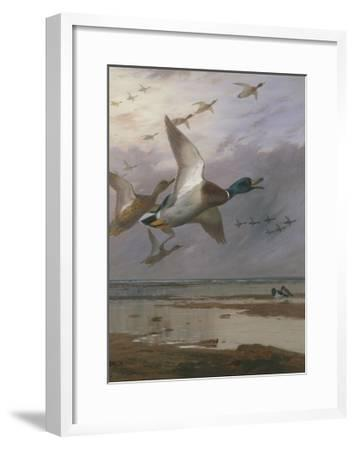 Duck Rising-Archibald Thorburn-Framed Giclee Print