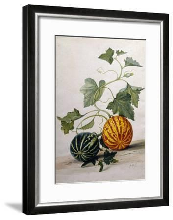 A Study of Gourds-Pieter Withoos-Framed Giclee Print