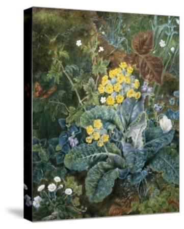 A Still Life of Polyanthus and Butterfly-Mary Margetts-Stretched Canvas Print