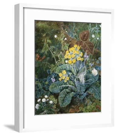 A Still Life of Polyanthus and Butterfly-Mary Margetts-Framed Giclee Print