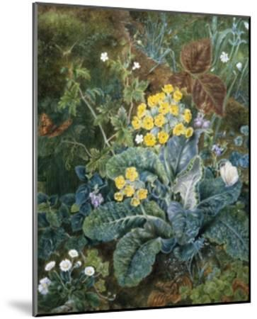 A Still Life of Polyanthus and Butterfly-Mary Margetts-Mounted Giclee Print