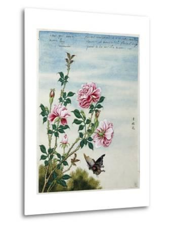 Early 19th-Century Chinese Watercolor of Pink Roses--Metal Print