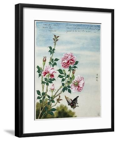 Early 19th-Century Chinese Watercolor of Pink Roses--Framed Giclee Print