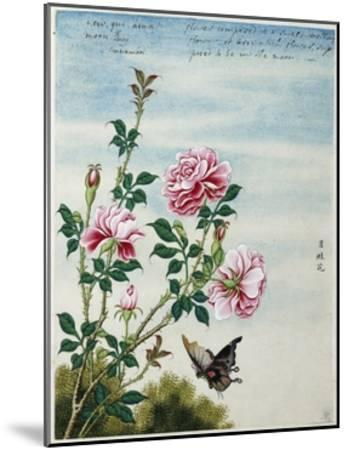 Early 19th-Century Chinese Watercolor of Pink Roses--Mounted Giclee Print