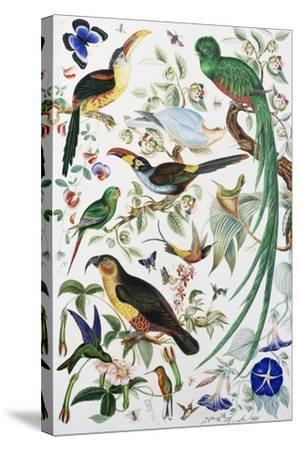 Exotic Parrots--Stretched Canvas Print