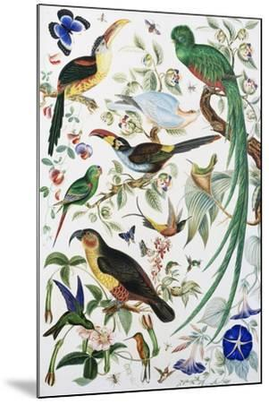 Exotic Parrots--Mounted Giclee Print