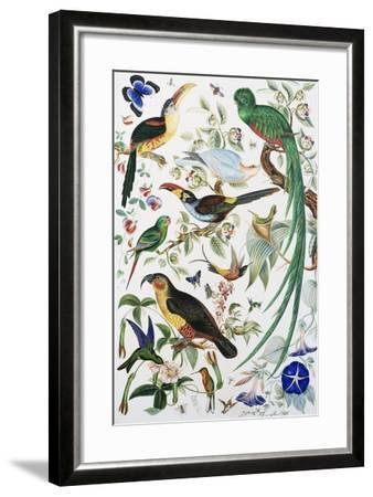 Exotic Parrots--Framed Giclee Print