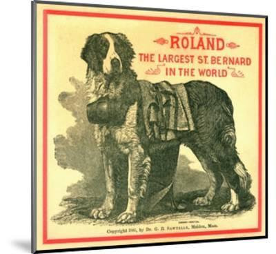 Roland the Largest St. Bernard in the World Trade Card--Mounted Giclee Print