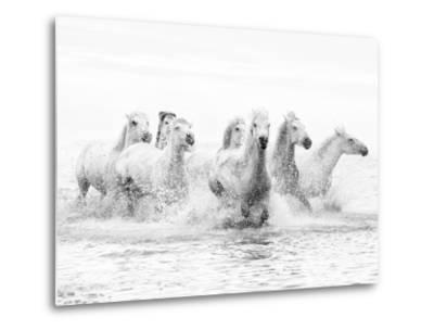 White Horses of Camargue Running Through the Water, Camargue, France-Nadia Isakova-Metal Print