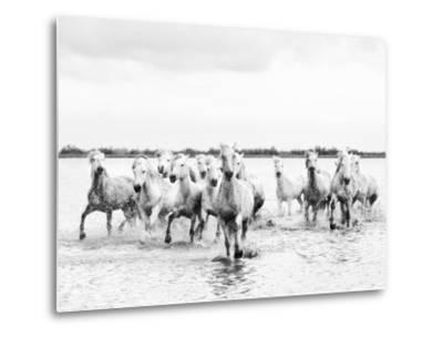 Camargue White Horses Galloping Through Water, Camargue, France-Nadia Isakova-Metal Print
