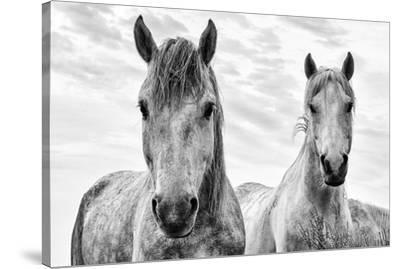 White Horses, Camargue, France-Nadia Isakova-Stretched Canvas Print