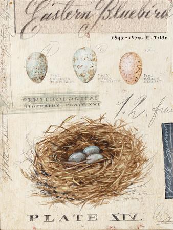Nature's Nest-Angela Staehling-Framed Art Print