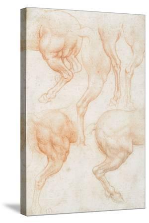 Studies of the Horse Rear Legs-Leonardo da Vinci-Stretched Canvas Print
