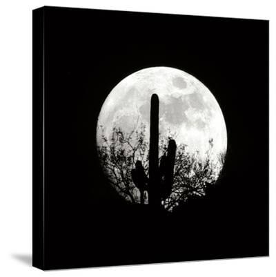 Moonrise in May II-Douglas Taylor-Stretched Canvas Print