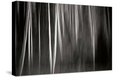 Abstract Trees-Beth Wold-Stretched Canvas Print