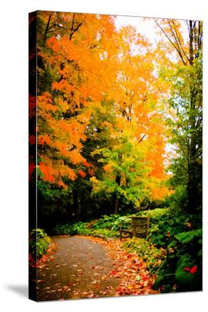 Autumn Pathway III-Beth Wold-Stretched Canvas Print