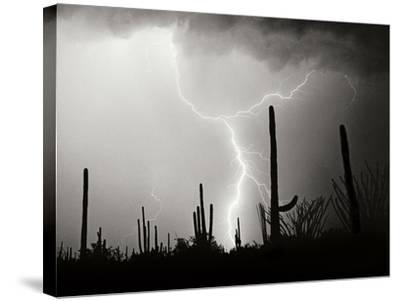 Electric Desert II BW-Douglas Taylor-Stretched Canvas Print