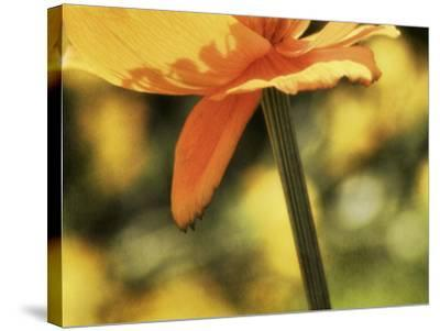 See Through-Roberta Murray-Stretched Canvas Print