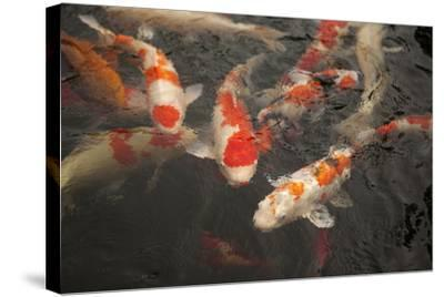 Koi I-Karyn Millet-Stretched Canvas Print