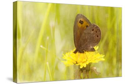 Weeds Make Nectar-Roberta Murray-Stretched Canvas Print