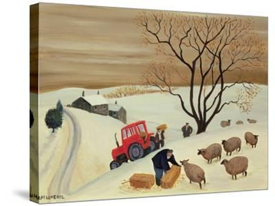 Taking Hay to the Sheep by Tractor-Margaret Loxton-Stretched Canvas Print