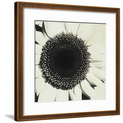 Sunflower-Graeme Harris-Framed Photographic Print