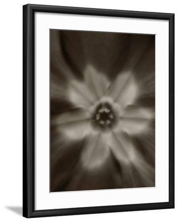 Flower-Graeme Harris-Framed Photographic Print
