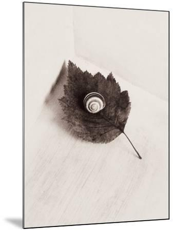 Seashell and Leaf-Graeme Harris-Mounted Photographic Print