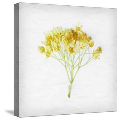 Meditative Yellow-Daniela Savone-Stretched Canvas Print