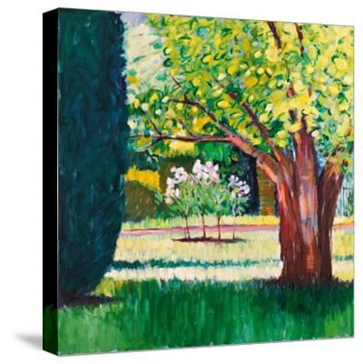 Summer-Marco Cazzulini-Stretched Canvas Print