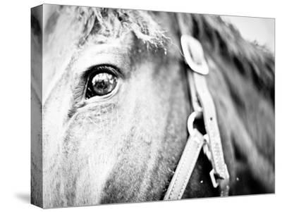 Horseback Riding I-Susan Bryant-Stretched Canvas Print