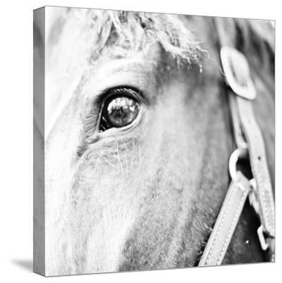 In the Stable I-Susan Bryant-Stretched Canvas Print