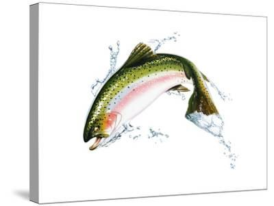 A Pink Salmon Jumping Out of the Water--Stretched Canvas Print