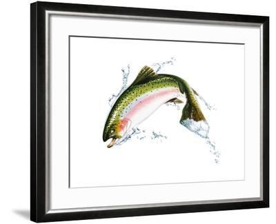 A Pink Salmon Jumping Out of the Water--Framed Art Print