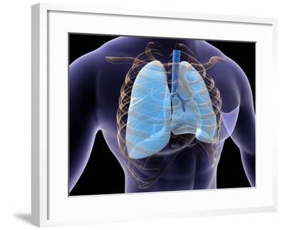 Conceptual Image of Human Lungs and Rib Cage--Framed Art Print