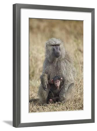 Olive Baboon (Papio Cynocephalus Anubis) Infant and Mother-James Hager-Framed Photographic Print