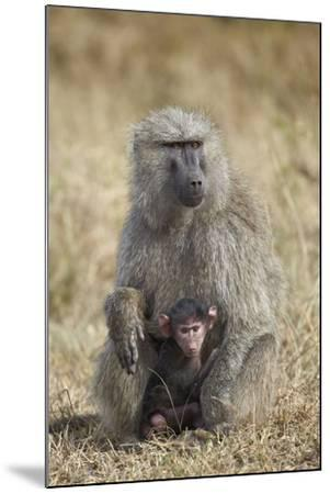 Olive Baboon (Papio Cynocephalus Anubis) Infant and Mother-James Hager-Mounted Photographic Print