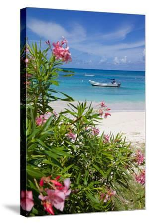 Long Bay and Beach, Antigua, Leeward Islands, West Indies, Caribbean, Central America-Frank Fell-Stretched Canvas Print